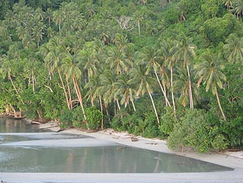 Coconut trees are part of Fiji's natural pristine environment.